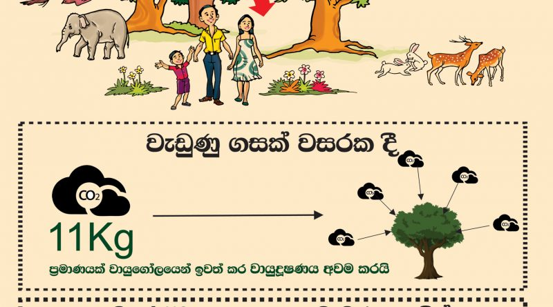 Value of Forest