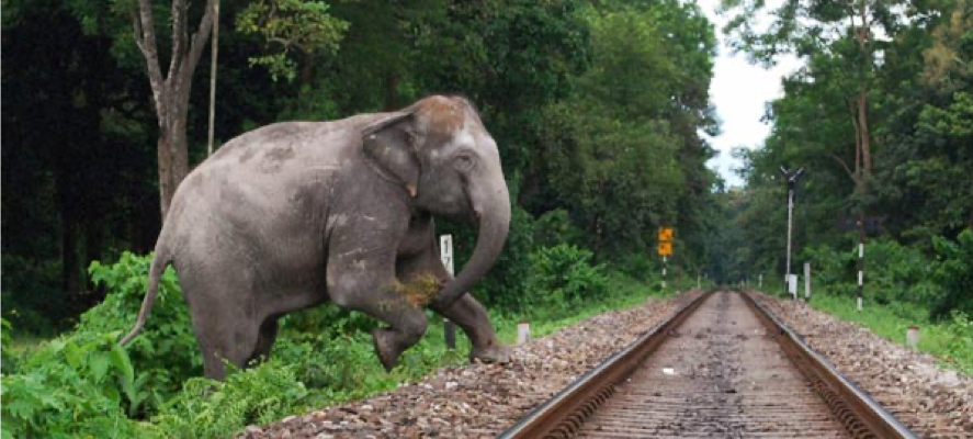 Consummation Of Human Elephant Conflict In Sri Lanka Ejustice The sri lankan subspecies is the largest and also the darkest of the asian elephants, with patches of depigmentation—areas with no skin color—on its the sri lankan elephant population has fallen almost 65% since the turn of the 19th century. human elephant conflict in sri lanka